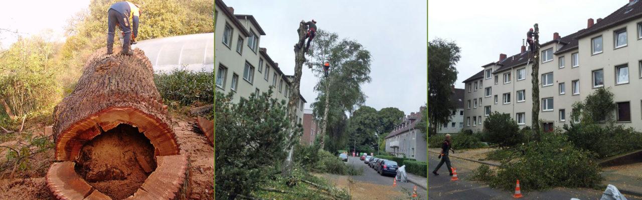 Baumfällungen und Baumpflege in Wilhelmshaven