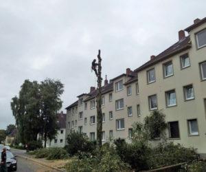 Baumfällarbeiten in Wilhelmshaven