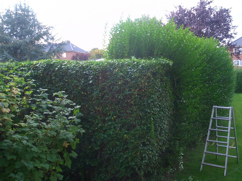 Evergreen Gartenbau gartenpflege und grünflächenpflege in whv gartenbau landschaftsbau