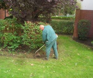 Gartenpflege / Heckenschnitt / Gartenbau in Wilhelmshaven