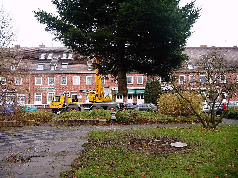 Weihnachtsbaum-Transport in Wilhelmshaven