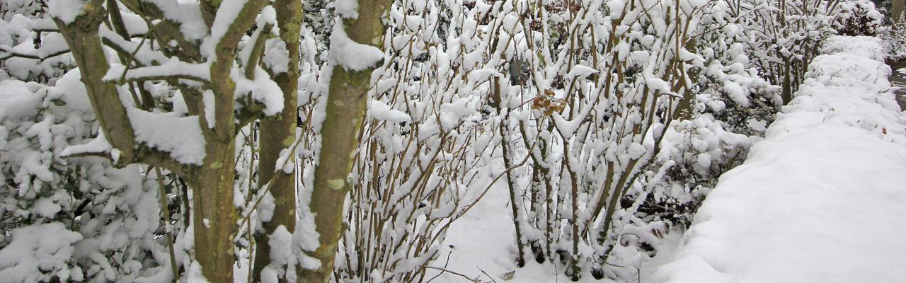 Winterdienst gartenbau landschafts bau hardieck wilhelmshaven - Winter gartenbau ...